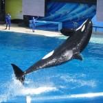 Whale tricks