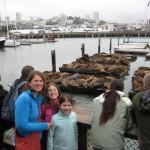 Sea Lions at Pier 39